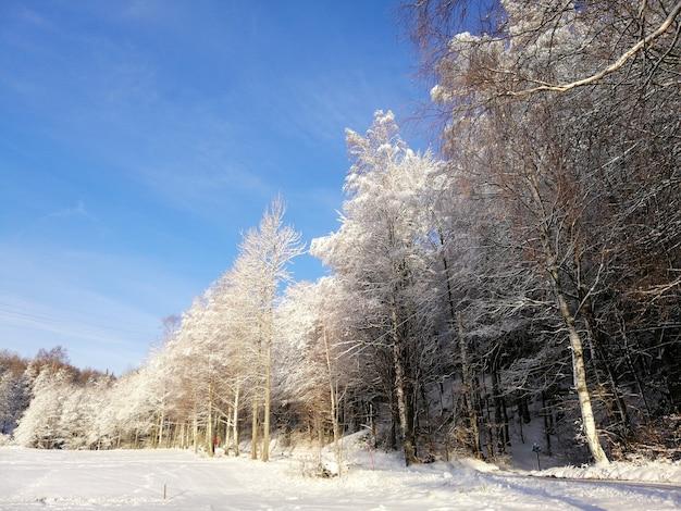 Wald umgeben von bäumen im schnee unter dem sonnenlicht und einem blauen himmel in norwegen bedeckt Kostenlose Fotos