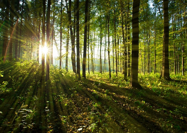 Waldbäume Premium Fotos