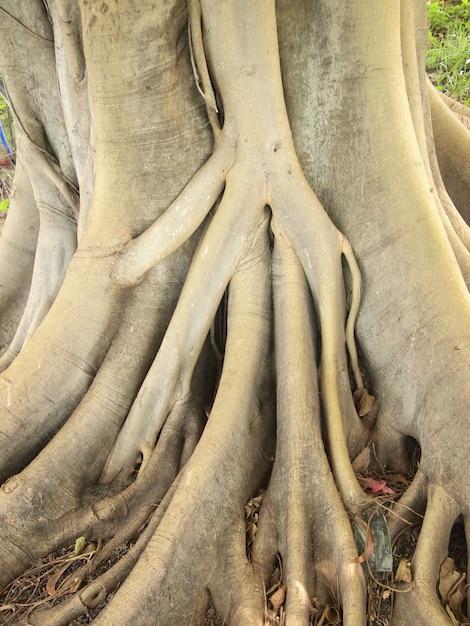 Waldbaum mit wurzeln Premium Fotos