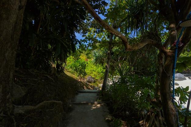 Waldfeld und -baum der grünen parks Premium Fotos