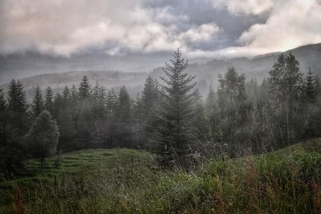 Waldlandschaft Kostenlose Fotos