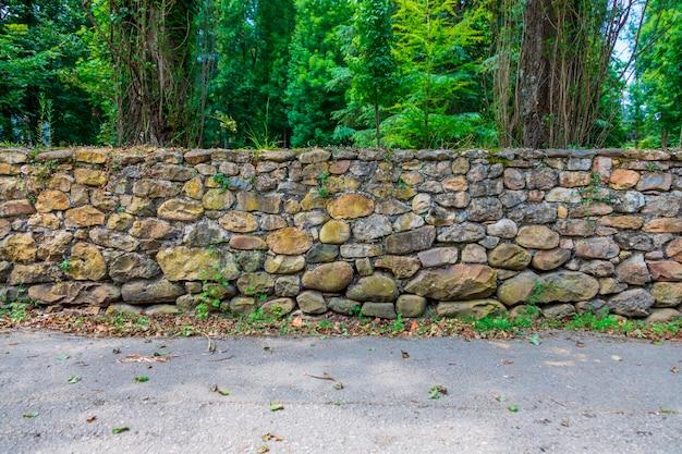Waldweg mit alter steinwand mit moos und vegetation Premium Fotos