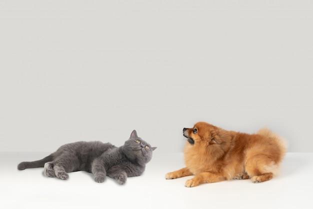 Warum können katzen und hunde nicht wie vögel fliegen? Premium Fotos