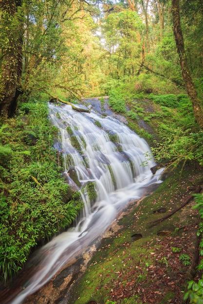 Wasserfall im immergrünen wald des hügels von doi inthanon, chiang mai, thailand Premium Fotos