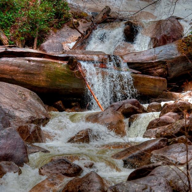 Wasserfall, shannon fällt provinzieller park, britisch-columbia, kanada Premium Fotos