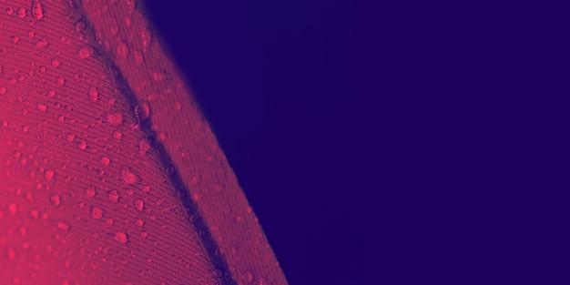 Wassertropfen auf roter federbeschaffenheit gegen farbigen hintergrund Kostenlose Fotos