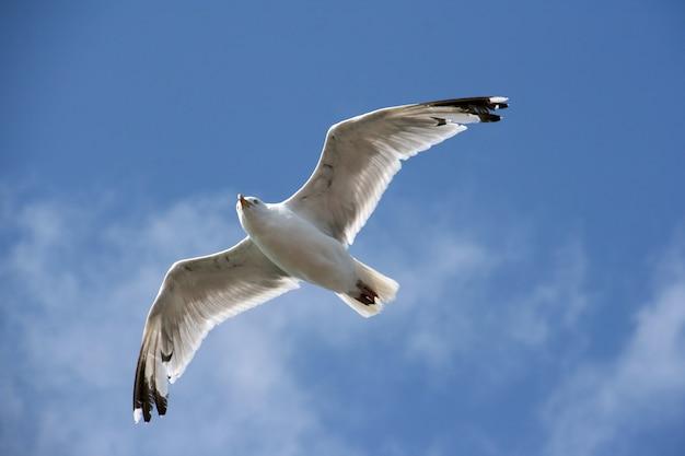 Wasservogel Kostenlose Fotos