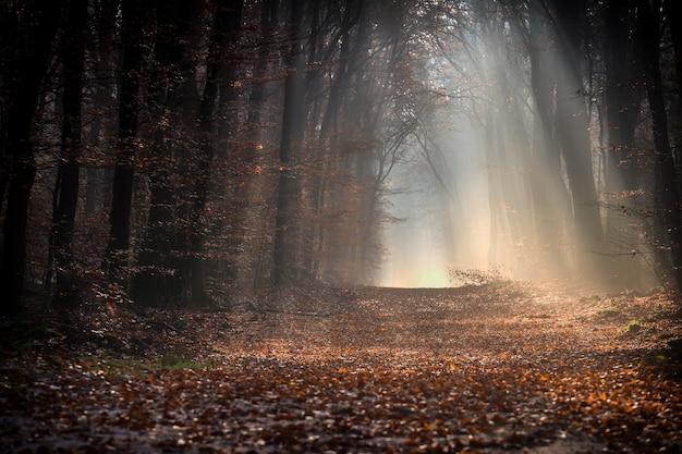 Weg in einem wald bedeckt mit blättern, umgeben von bäumen unter dem sonnenlicht im herbst Kostenlose Fotos