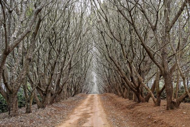 Weg inmitten von bäumen ohne blätter Kostenlose Fotos