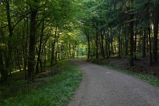 Weg mitten in einem wald mit grünen bäumen in der eifel, deutschland Kostenlose Fotos