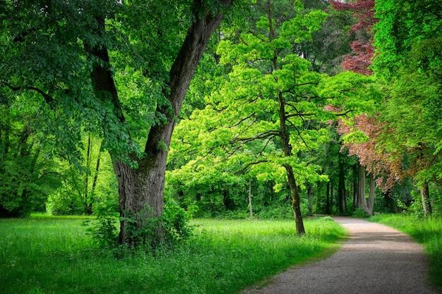 Weg umgeben von viel grün in einem wald unter dem sonnenlicht Kostenlose Fotos