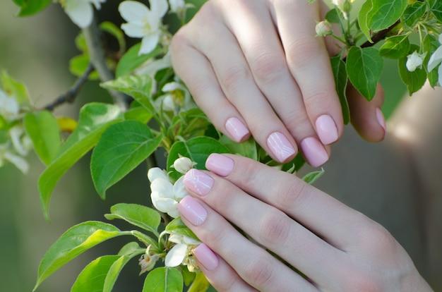 Weibliche hände mit apfelbaumblumen, maniküre Premium Fotos