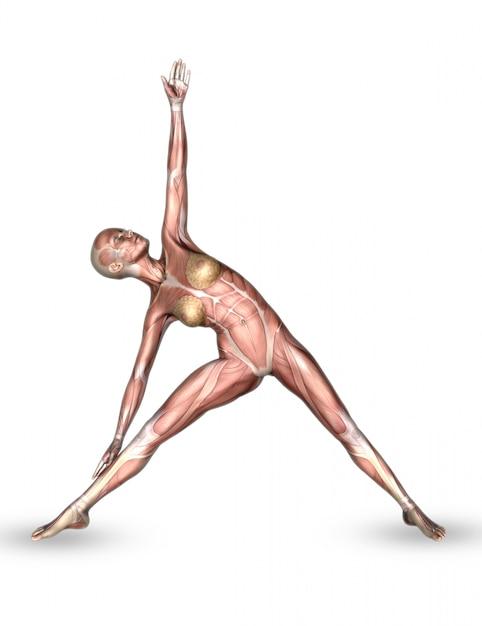 Weibliche medizinische zahl 3d mit muskelkarte in der yogahaltung Kostenlose Fotos