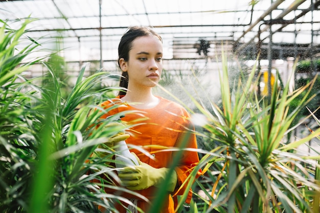Weiblicher gärtner, der auf anlage im gewächshaus sprüht Kostenlose Fotos