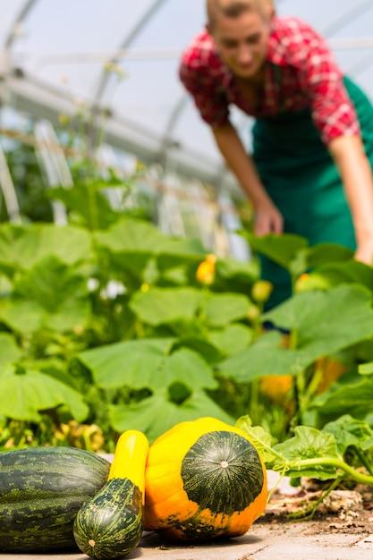 Weiblicher gärtner im gemüsegarten oder in der kindertagesstätte Premium Fotos