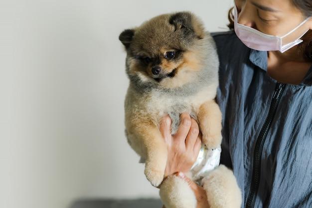 Weiblicher groomer, der einen hund an einem salon im schönheitssalon für hunde hält Premium Fotos