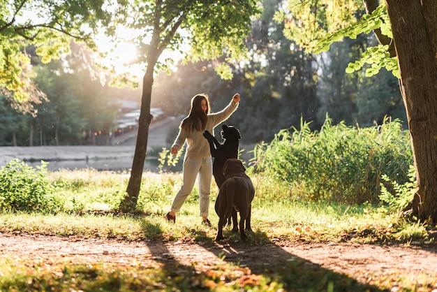 Weiblicher tierhalter mit zwei hunden, die mit ball im park spielen Kostenlose Fotos
