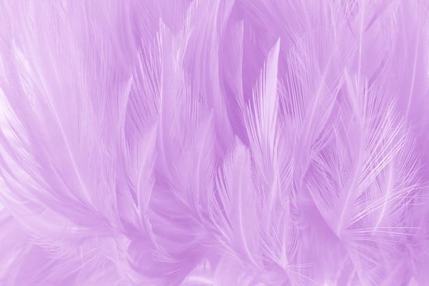 Weiche purpurrote farbe versieht beschaffenheitshintergrund mit federn. Premium Fotos