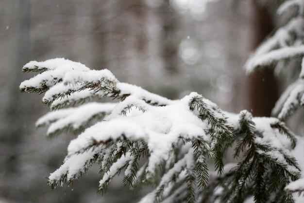 Weicher fokus der schneebedeckten fichte vor einem verschwommenen hintergrund im winter Kostenlose Fotos