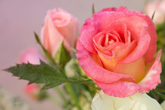 Weicher Fokus Der Süßen Rose Für Valentinstag Hintergrund Premium Fotos