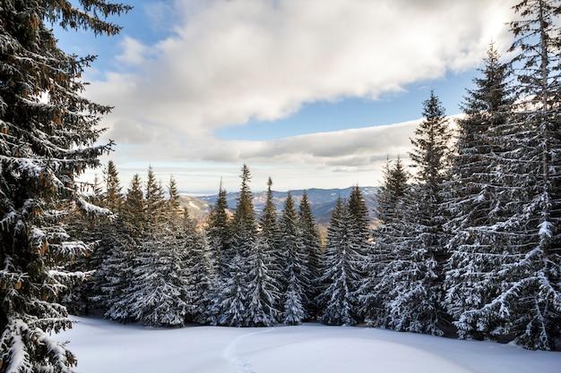 Weihnachten winterlandschaft. die schönen hohen tannenbäume, die mit schnee und frost auf berghang bedeckt wurden, beleuchteten Premium Fotos