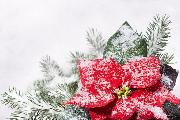 Weihnachtsanlage und weihnachtsbaum unter schnee Premium Fotos