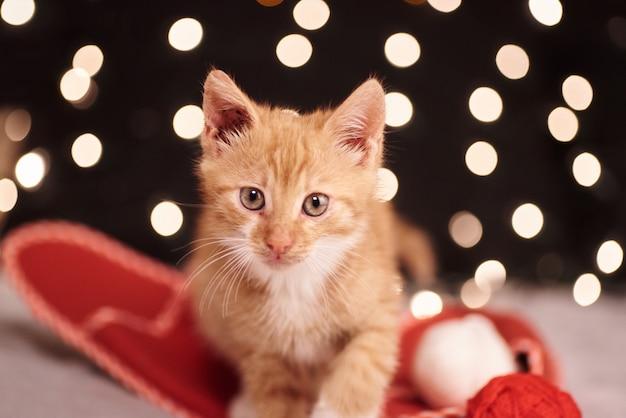 Weihnachtsbild mit einer niedlichen ingwerkatze von bunten lichtern auf dem hintergrund Premium Fotos