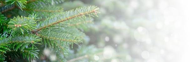 Weihnachtshintergrund mit schneebedeckten zweigen Kostenlose Fotos