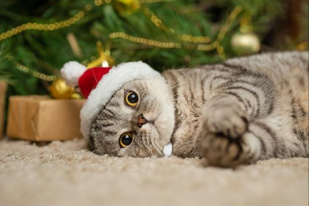 Weihnachtskatze in einem roten santa claus-hut, neues jahr, grußkarte, fahne Premium Fotos