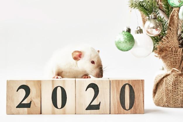 Weihnachtsratte symbol des neuen jahres 2020. jahr der ratte. chinesisches neujahr 2020. weihnachten spielzeug, bokeh. ratte auf dem hintergrund von weihnachtsdekorationen. neues jahr der weihnachtsgrußkarten-schablone Premium Fotos
