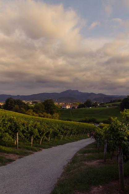 Weinberge bei hondarribia, baskenland. Premium Fotos
