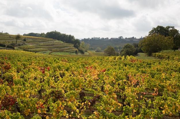 Weinberge von saint-emilion südwestlich von frankreich, bordeaux Premium Fotos