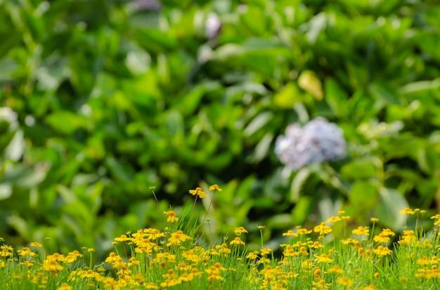 Weinlesefoto des löwenzahnfelds im sonnenuntergang Premium Fotos