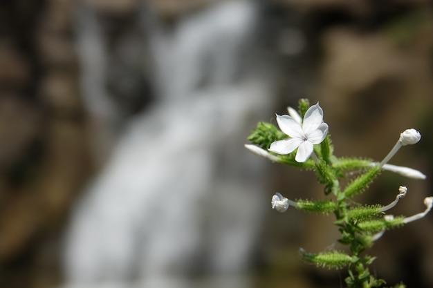 Weiße blume mit einem wasserfall hintergrund unscharf Kostenlose Fotos