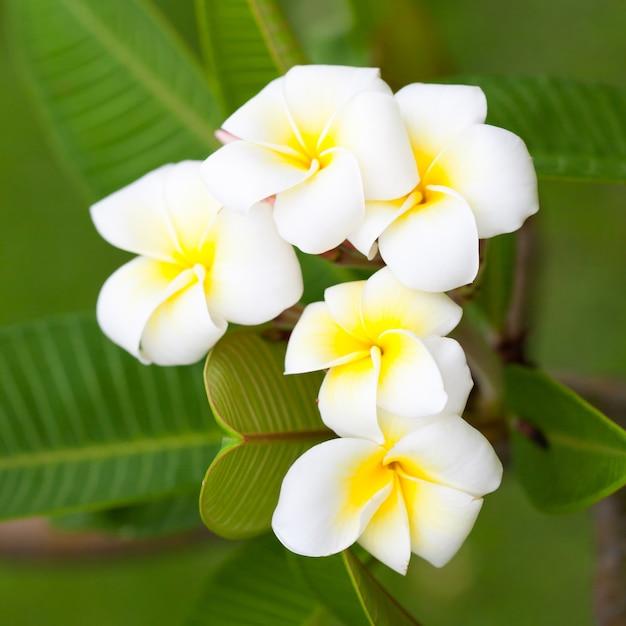 Weiße Blumen auf Bäumen | Download der Premium Fotos