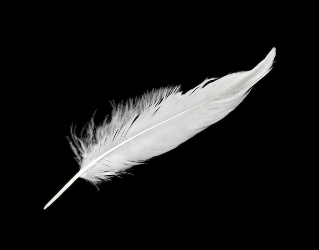 Weiße feder lokalisiert auf schwarzem hintergrund Premium Fotos
