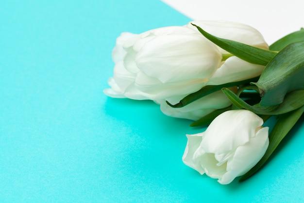 Weiße frische tulpen auf farbblockpapier Premium Fotos
