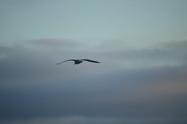 Weiße getrennte seemöwe auf einem hintergrund des blauen himmels Premium Fotos