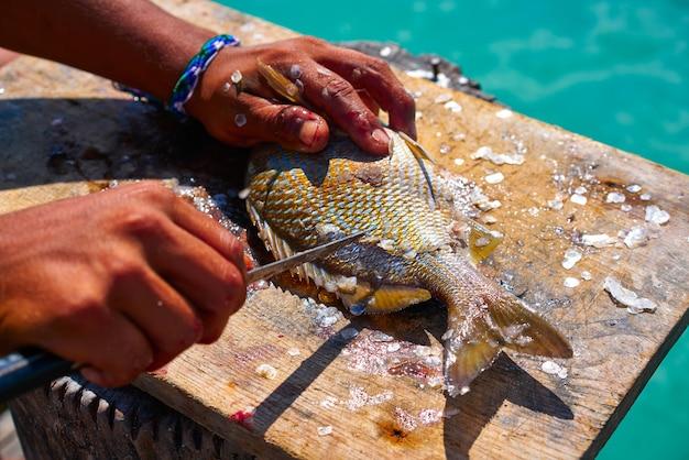 Weiße grunzenfische entspannen sich in der karibik Premium Fotos