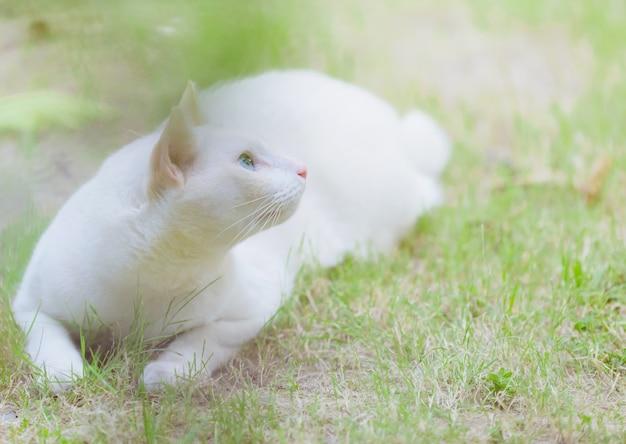 Weiße katze, die im gras, haustierkonzept sitzt Premium Fotos
