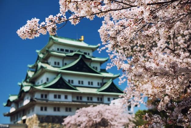 Weiße kirschblüte mit nagoya castle Premium Fotos