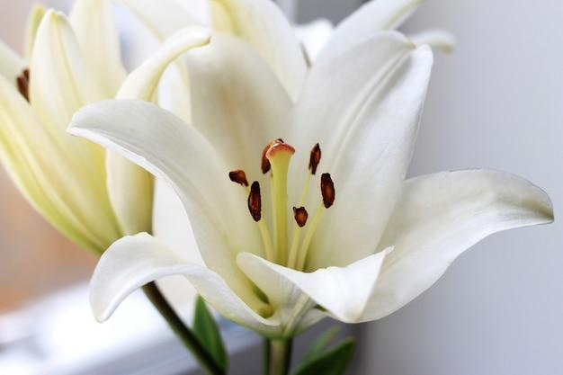Weiße lilie blüht blumenstrauß. abschluss oben, heller blühender hochzeitshintergrund. Premium Fotos