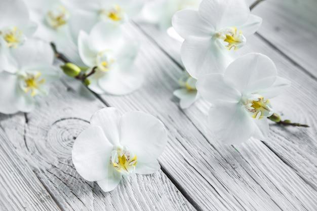 Weiße orchidee auf hölzernem hintergrund Kostenlose Fotos