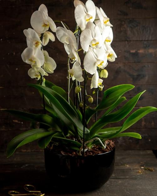 Weiße orchideen-seitenansicht Kostenlose Fotos