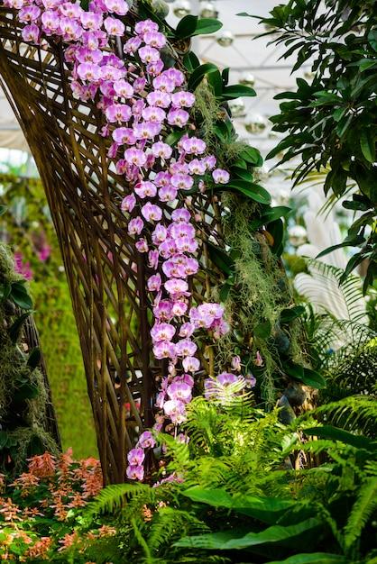 Weiße orchideenblumen auf dem baum Premium Fotos