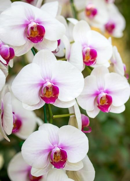 37 orchideen bilder kostenlos  besten bilder von ausmalbilder