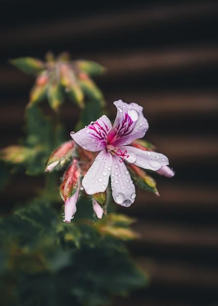 Weiße und lila blütenblätter mit regentropfen Kostenlose Fotos