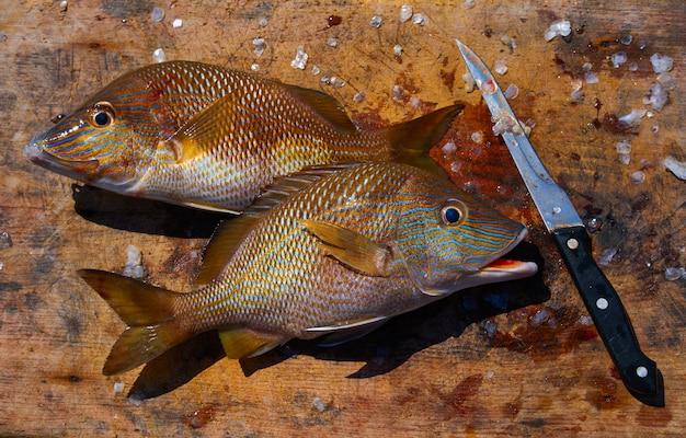 Weißer grunzenfisch haemulon plumieri Premium Fotos
