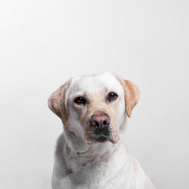 Weißer hund Kostenlose Fotos