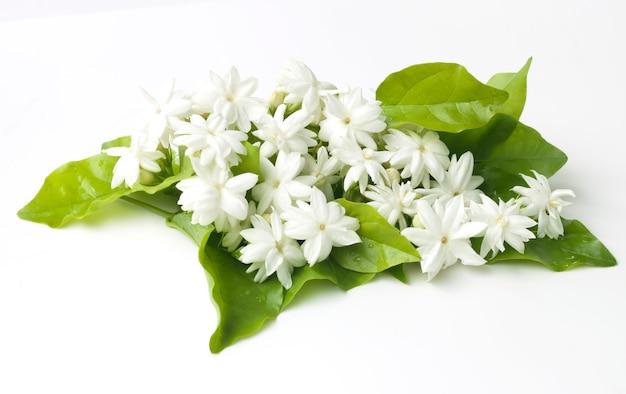Weißer jasmin blüht die frischen natürlichen blumen Premium Fotos